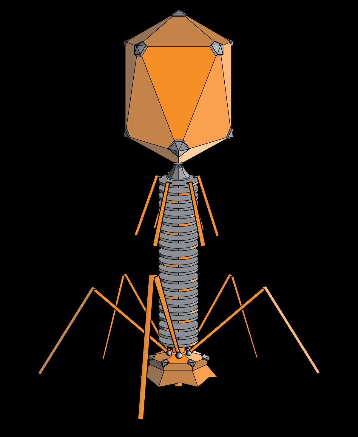 bacteriofaag