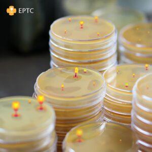 Gevoeligheidsonderzoek voor bacteriofagen in de kliniek